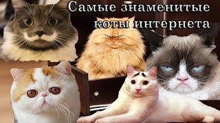 Самые знаменитые коты интернета!