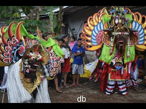 jaranan-tri-manunggal-budoyo-banyuwangi-live-genteng-curah-tangi