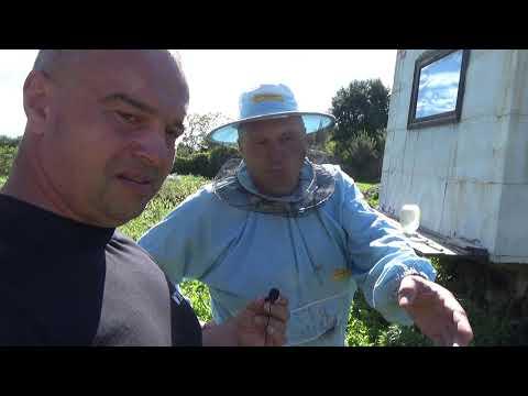 Беседа с пчеловодом о пчёлах и не только.Внимание ненормативная лексика +16