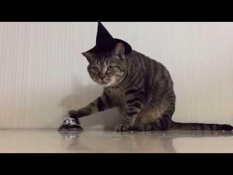 scavenger hunt cat school gear upgrade diagrams part 1