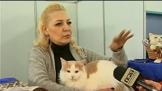 У Полтаві відбулася п'ятнадцята міжнародна виставка котів