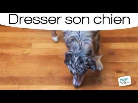 Dresser son chien pour qu'il aille au panier - YouTube