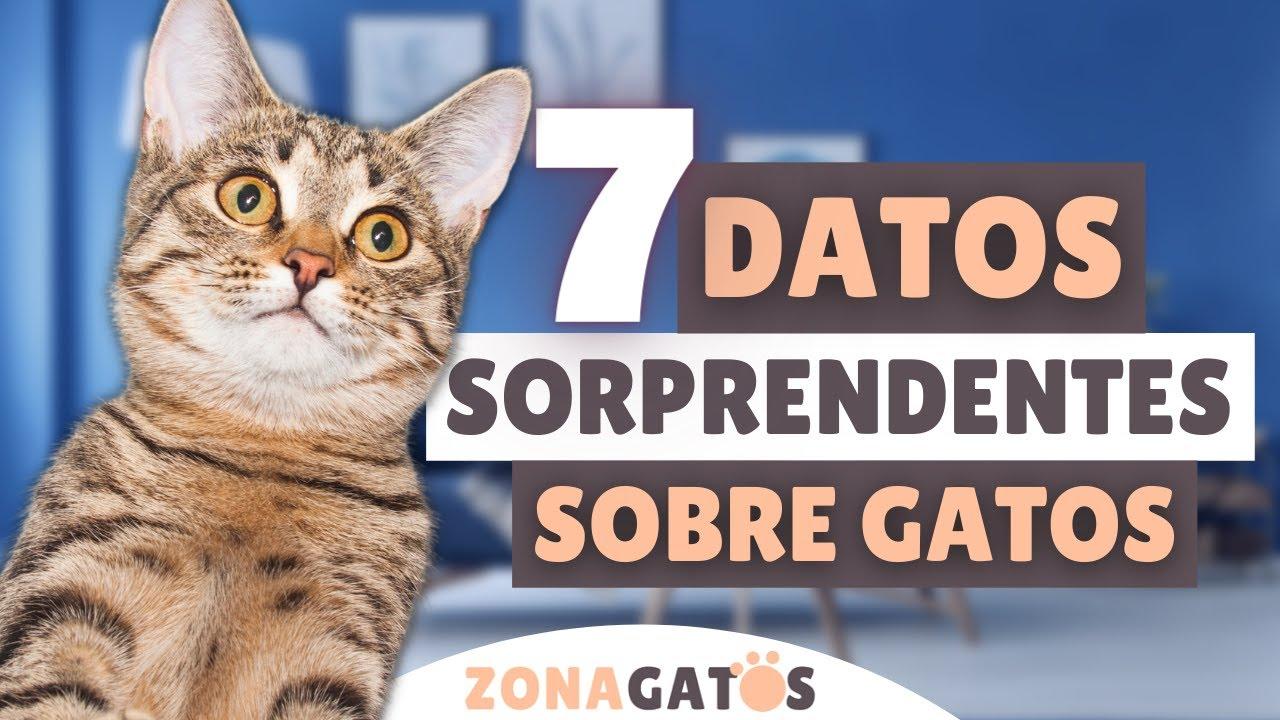 ¿LO SABÍAS? ➡️ 7 datos SORPRENDENTES sobre gatos