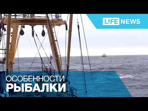 Съемочная группа LifeNews вышла на лов сельди в Охотское море