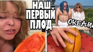 Пробуем нашу первую папайю, наш первый плод...