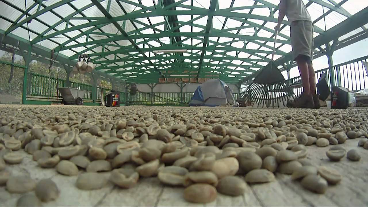 the working conditions of coffee farmers The problem with fair trade coffee   helps workers create safe working conditions,  to maximize his income, therefore, he will choose to sell his lower quality coffee as fair trade.
