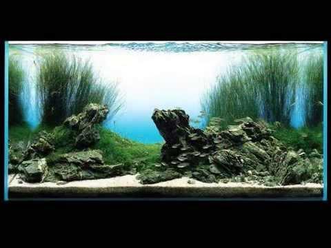 Film Takashi Amano aquarium aquascaping