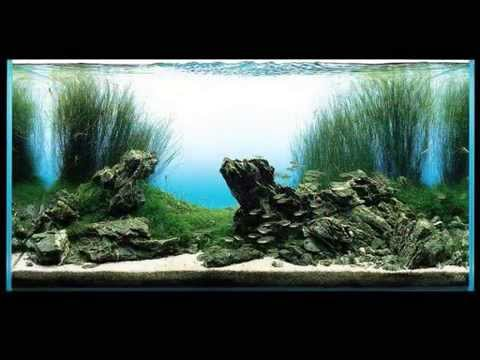 Film Takashi Amano Aquarium Aquascaping Youtube