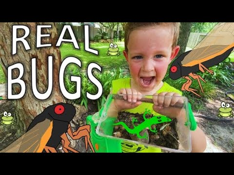 Download BUG HUNT for REAL Bugs! LIZARD, Grubs, BEETLES, Roly Polys, EARWIGS, Toads, WORMS & MORE for KIDS!!