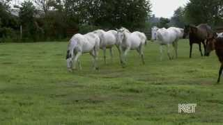 White Thoroughbreds | Kentucky Life | KET