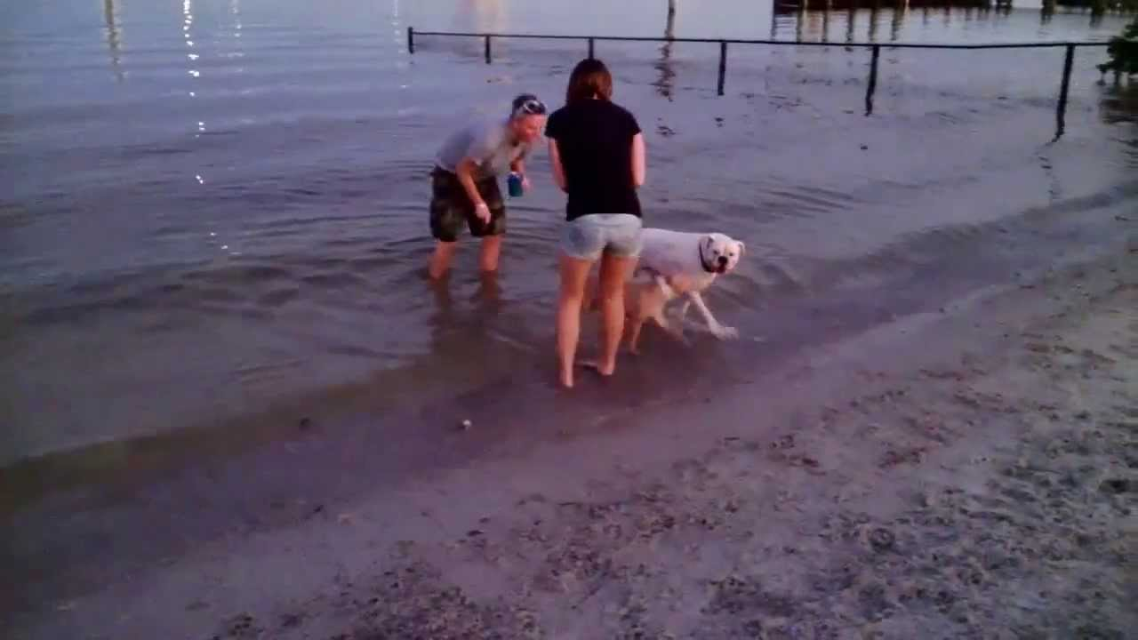 Davis Island Dog Beach Florida 2017