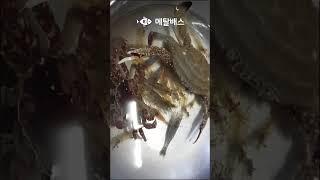 #꽃게랑싸우기#짬해루질로꽃게새우라면재료잡아옴#Short…