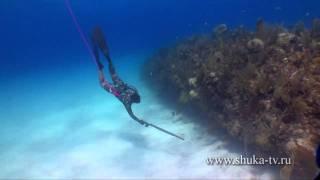 Подводная охота на Кубе часть 4 Spearfishing in Cuba
