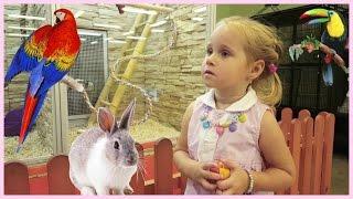 VLOG: Зоомагазин! Рыбки! Птички! Кролики! Влог | Златуня(VLOG: Зоомагазин! Рыбки! Птички! Кролики! Влог | Златуня Сегодня Влог Златуни о посещении одного Зоомагазина...., 2016-07-30T13:48:38.000Z)