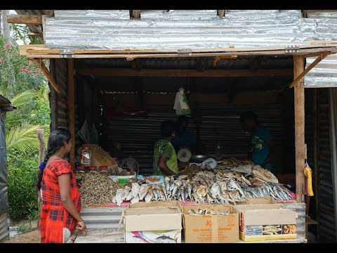 🎥 Sri Lankan Fish Market - Food Travel Blog - Sri Lanka Trincomalee Vlog Street Food - Trinco