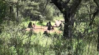 Serengeti Wildlife and Maasai