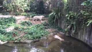 World's Best Zoo, Slurpee & Marina Bay Vlog | Singapore HD Vlog #6