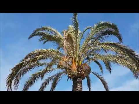 Monaco & Nice, France (Nizza) Travel Video VLOG