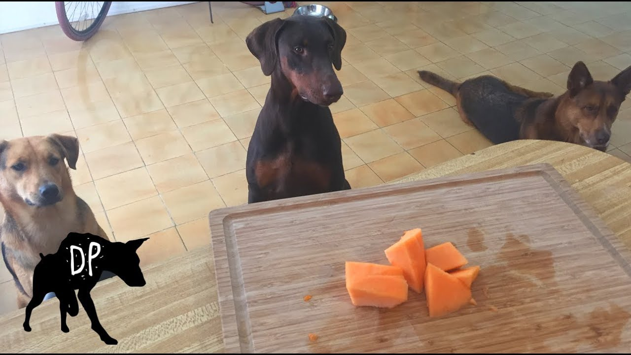Cantaloupe Dogs / Discover the potential health benefits, precautions and side effects of feeding cantaloupes to your dog.
