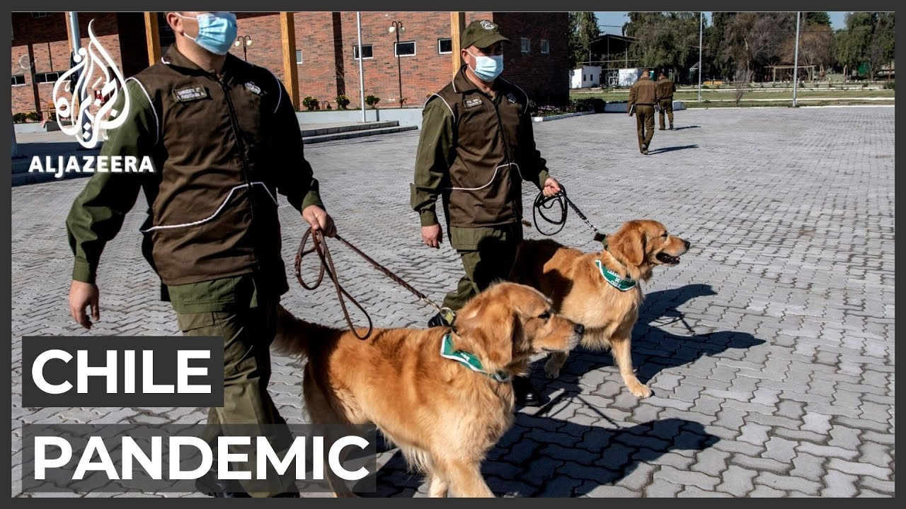 police train dogs to sniff out COVID-19 patients