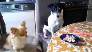 Hunde am Tisch