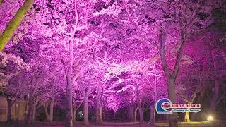 【夜桜ライトアップ2018b】HD
