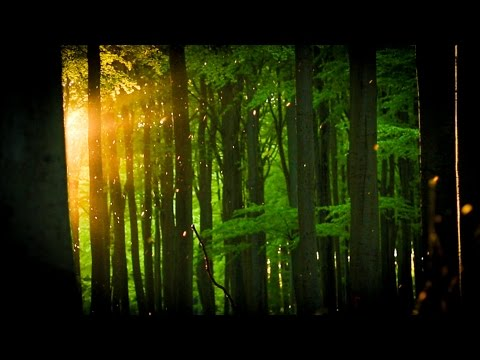 European Wilderness - Ancient Beech Forests of Germany