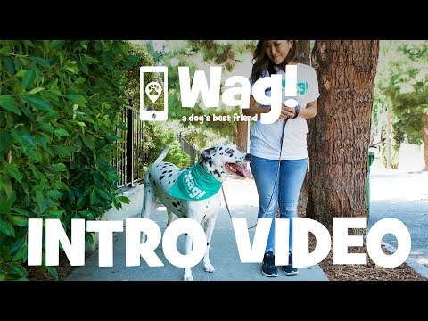Wag! Walking Review - Wag Dog Walking Cost, Pros & Cons, How-To
