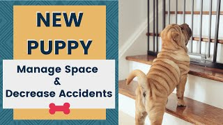 New Puppy - How to Manage the Space and Decrease Accidents
