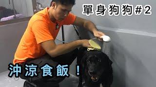 單身狗狗#02|幫啲老細沖涼煮飯|