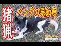 【猪猟】老犬パンダの悪知恵!