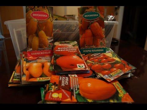 Чем отличается томат от помидора