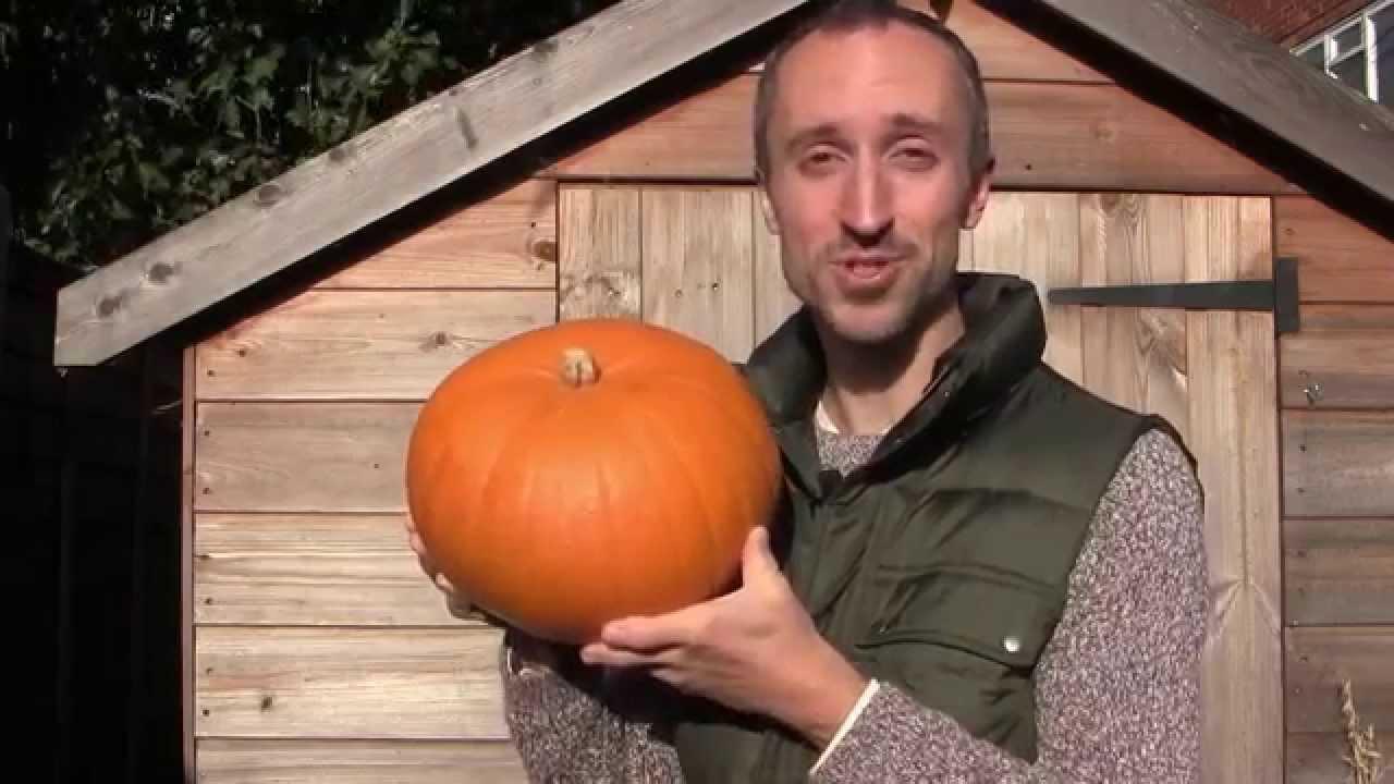 Curing Pumpkins and Winter Squash