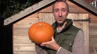 How to Grow, Cure and Store Pumpkins