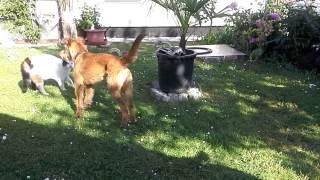 Repeat youtube video Katze stoppt hundekampf!