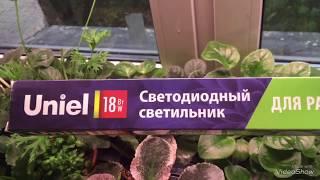Обзор светильника и подставки для растений UNIEL.