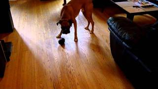 A+ Best Dog Toy: Xtreme Kong Black
