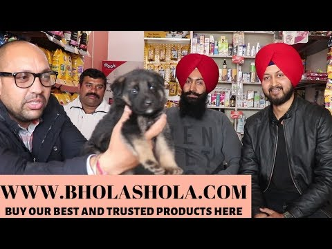 A collaboration video with all about automotives - Bhola Shola
