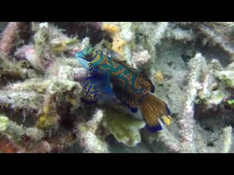 Lembeh Straits, Indonesia  Scuba Diving 2016