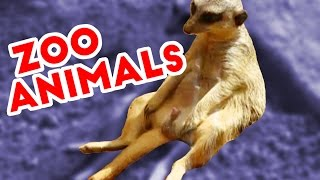 The Funniest Zootopia Home Video Bloopers of 2016 Weekly Compilation | Funny Pet Videos