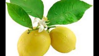 обрезка домашнего лимона(Как вырастить лимон в домашних условиях? Лимон уже давно не воспринимается как экзотический фрукт -- его..., 2015-04-04T08:08:02.000Z)