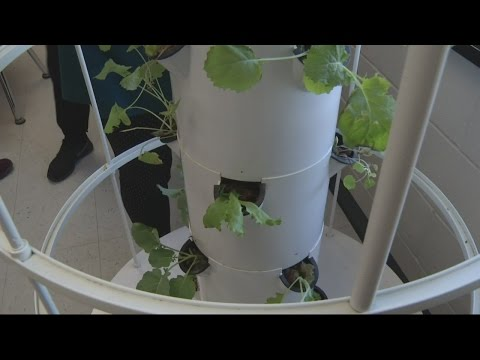 Grovetown Middle School students use hydroponics to help with community hunger