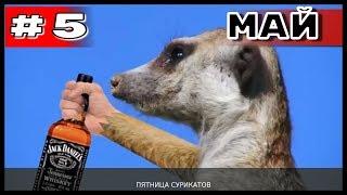 Большая подборка приколов COUB за май #5 2019 #приколы2019, #лучшееcoub, #Coub, #Bestcoub