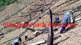 Gotong Royong Tanam Padi Bukit In Sabah