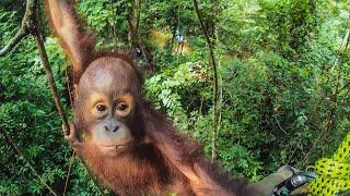 CUTE Orphan Orangutans Learn How To Climb | Primates | BBC Earth