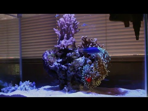 20 Gallon Saltwater Aquarium Guam