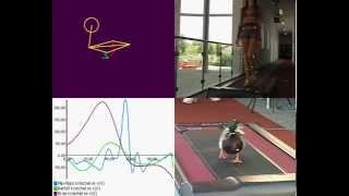 Gait Analysis - Comparison Duck vs. Human Gait - with Simi Motion