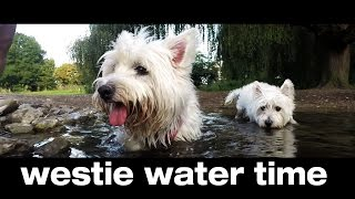 Westie Water Time : Dogs Gopro View #1 , Kent Uk