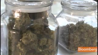 Yale MBA Grad Starts Marijuana Industry PE Fund