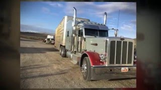 18 wheels (and a dozen roses) Kathy Mattea catttle trucking